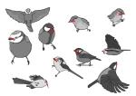 mo birds