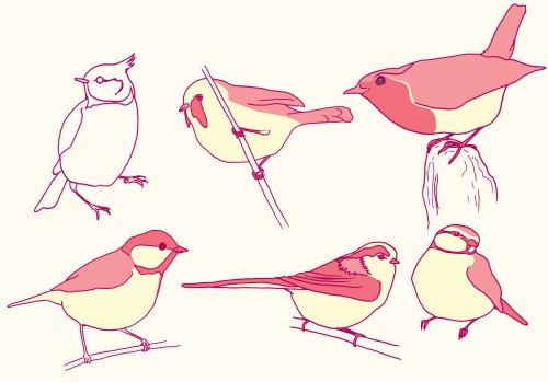 birds emma